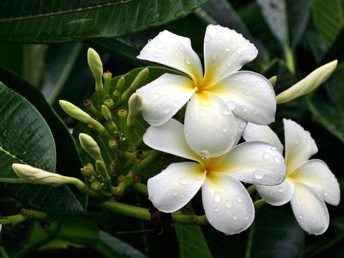 Названия белых цветов с картинками 8
