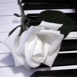 62554231_Piano_rose_by_Titanica (150x150, 25Kb)