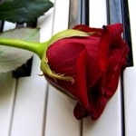 62554291_Rose_On_Piano_by_yhdenenkelinunelma (150x150, 23Kb)