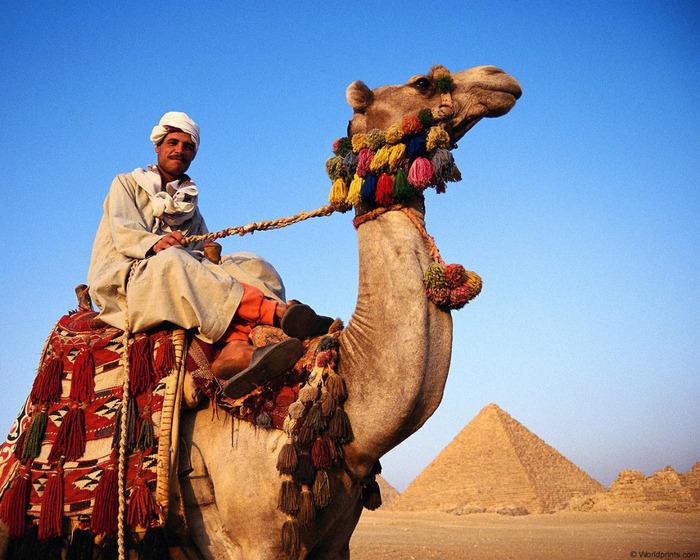 Курс евро в египте