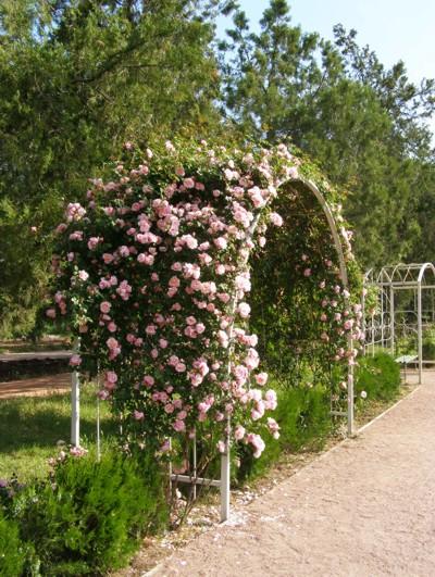 Арки для плетистых роз фото