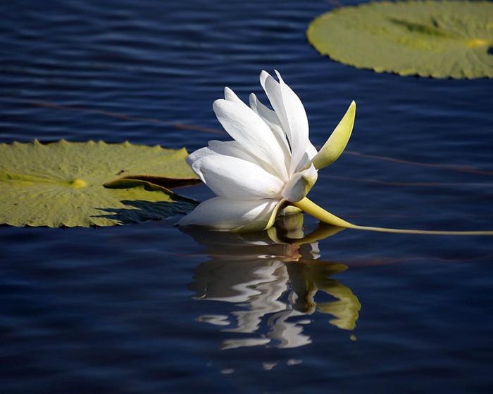 на воде стояла лодка в тени ее плавали водяные жуки название