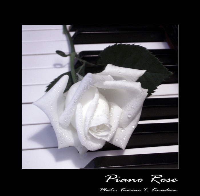 Piano_rose_by_Titanica (700x684, 198Kb)
