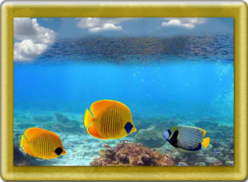 РАМ-для-море (350x257, 159Kb)