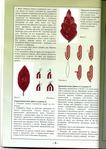 Книги - Волшебный бисер.  Е.Башкатова File0010