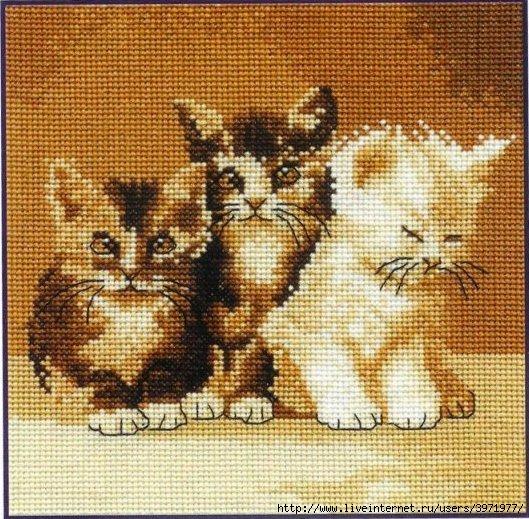 3971977_BK132Three_cute_cats (529x519, 247Kb)