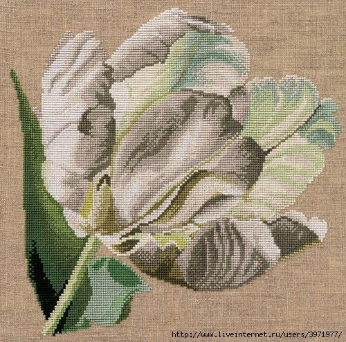 b Схема вышивки /b крестом - Белый тюльпан.