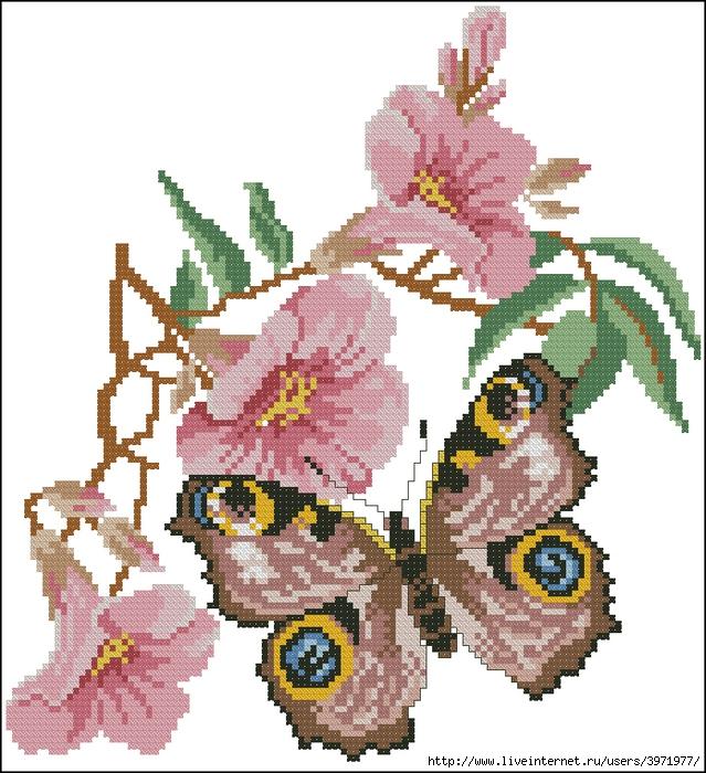 3971977_Butterflies_117 (639x700, 346Kb)