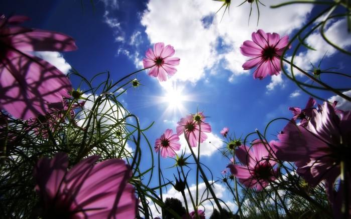 цветы тянутся к солнцу/4348076_47651280x800 (700x437, 91Kb)