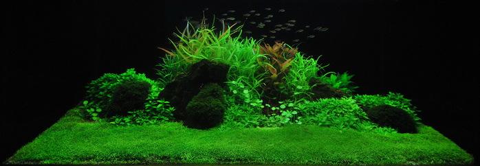 Комнатные растения на восточную