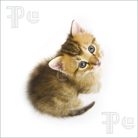 Kitten-1125510 (450x450, 19Kb)