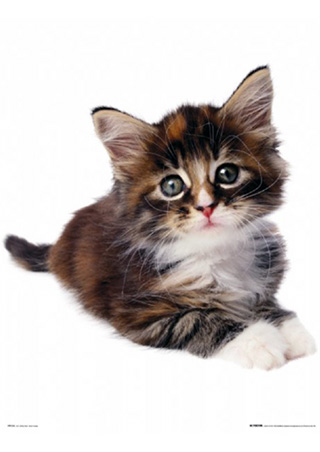 lgmp0360+little-kitten-the-cat-mini-poster (320x452, 32Kb)