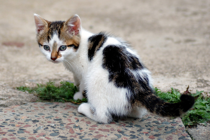 Six_weeks_old_cat_(aka) (700x466, 120Kb)