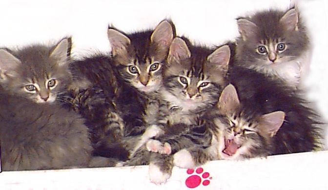 kittens (672x389, 59Kb)
