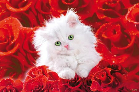 lgwiz01520+cute-fluffy-adorable-white-kitten-lying-in-red-roses-poster (452x301, 58Kb)