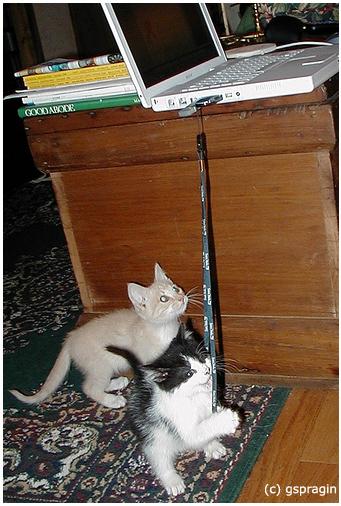 cats (341x506, 129Kb)