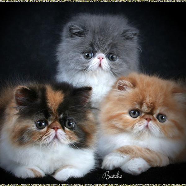 kitten_379 (600x600, 44Kb)