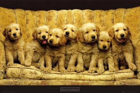 lgph0221+puppies-on-a-sofa-keith-kimberlin-poster (452x302, 106Kb)