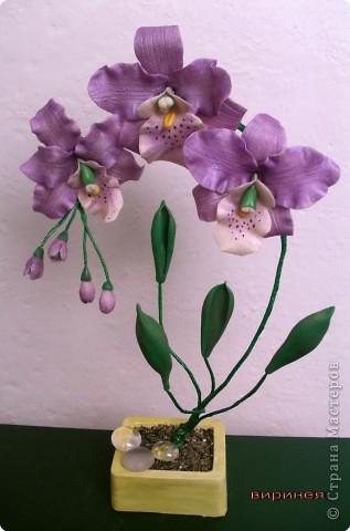 fiol._orhid._norm._um._0 (317x480, 37Kb)