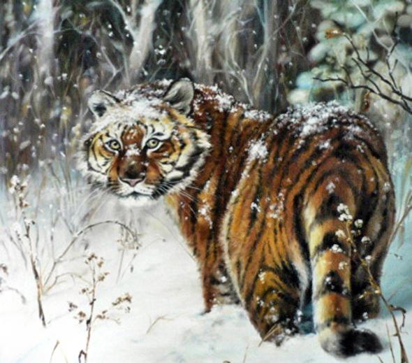 тигр, зима, снег.