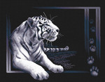Белый тигррррааа!