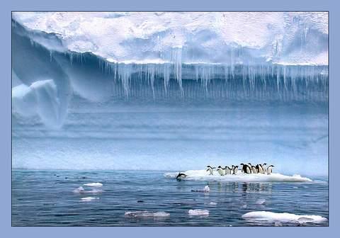 Antarktida2 (480x336, 22Kb)