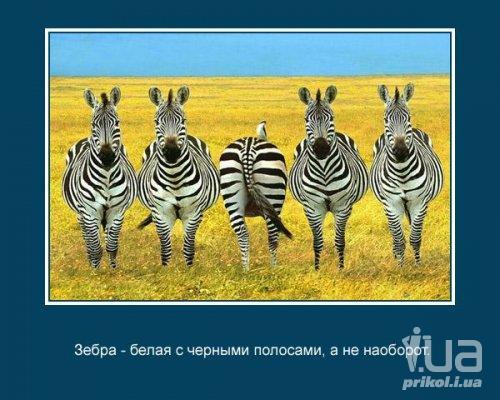 image001 (13) (500x400, 45Kb)
