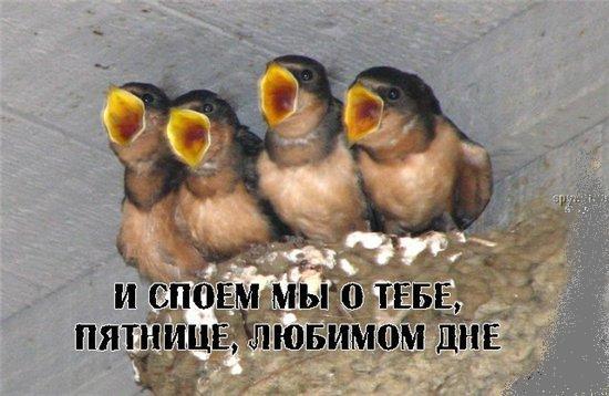 любимый день/4348076_spoem_o_pyatnice (550x358, 41Kb)