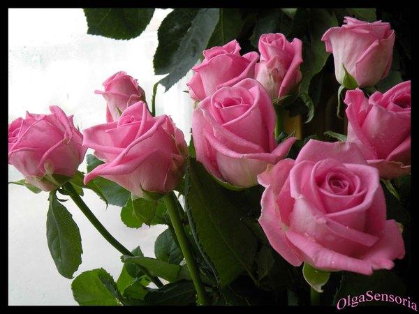 Розовые розы (600x450, 54Kb)