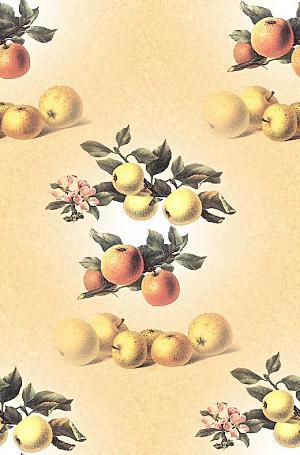 apple17 (300x455, 27Kb)