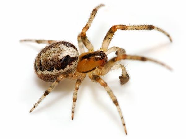 spider (600x450, 26Kb)