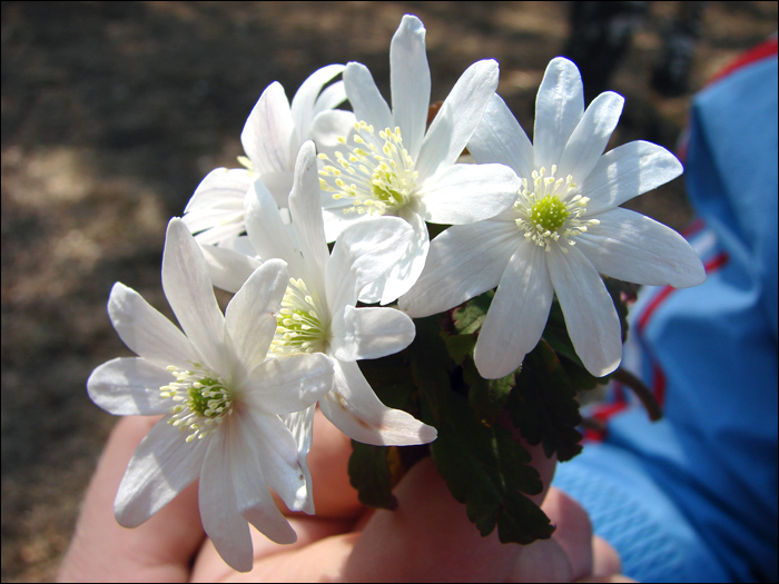12 - цветы (700x525, 202Kb)