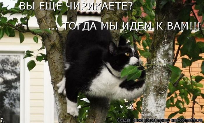 Забавные фотографии кошек с не менее забавными подписями к ним.
