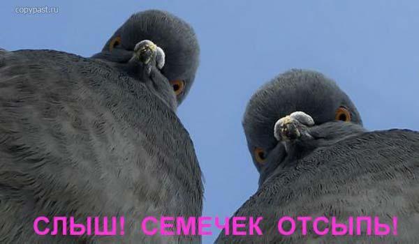 3875377_golybi (600x350, 23Kb)
