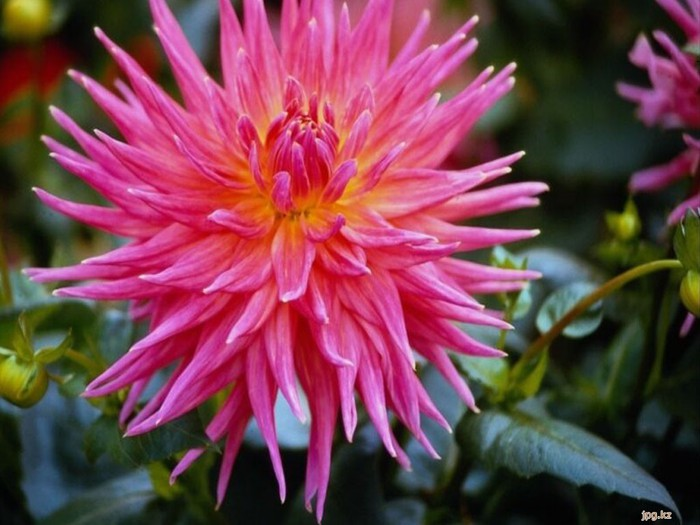Самые красивые цветы фото с название…