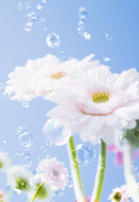 картинки цветы 240х320: