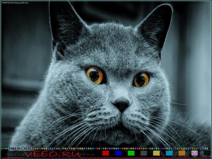veeo-cats-awfl (700x525, 144Kb)