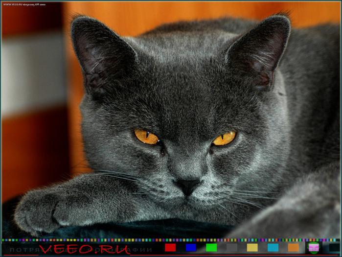 veeo-cats-bdpt (700x525, 145Kb)
