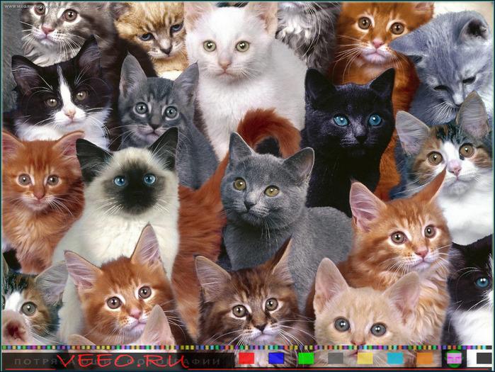 veeo-cats-bskj (700x525, 176Kb)