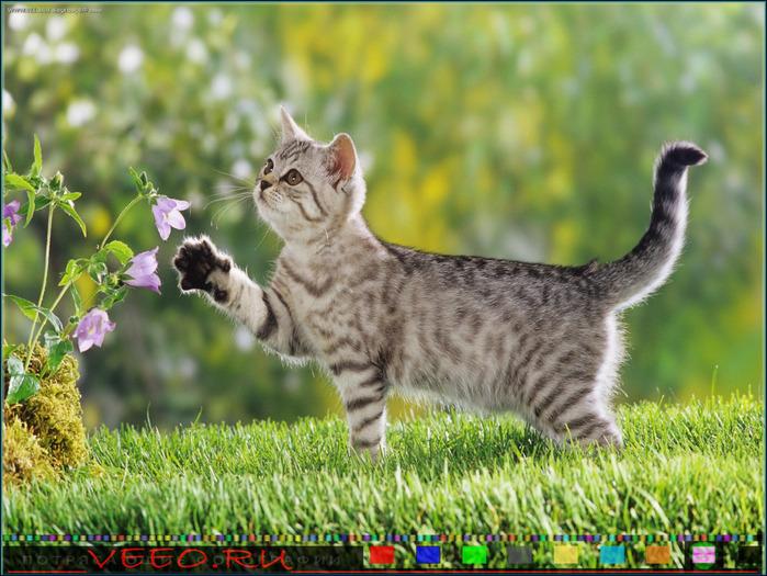 veeo-cats-chez (700x525, 169Kb)