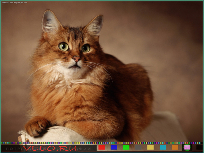 veeo-cats-aovd (700x525, 107Kb)