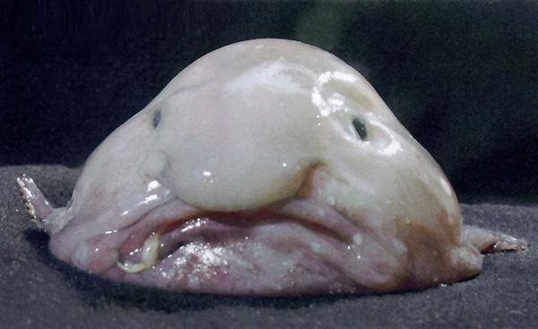 fish (600x367, 94Kb)
