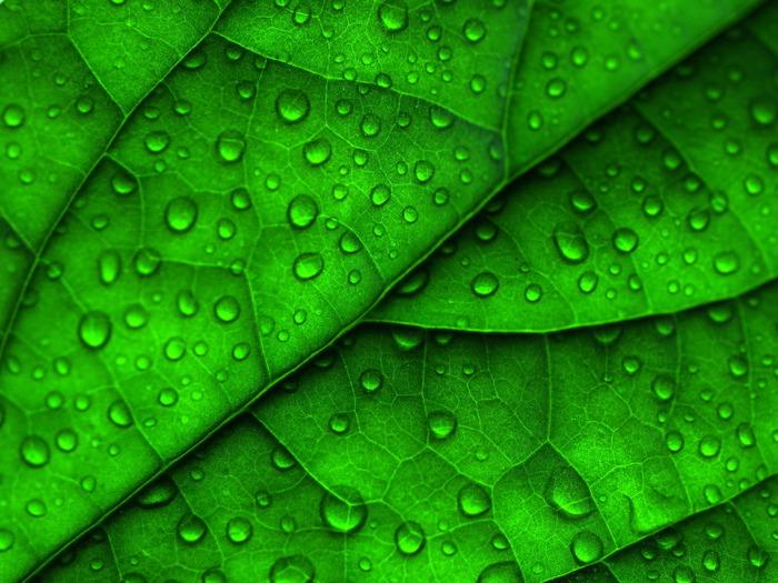 greendrops (700x525, 143Kb)