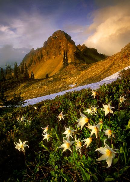 Wildflower-Storm (431x600, 381Kb)