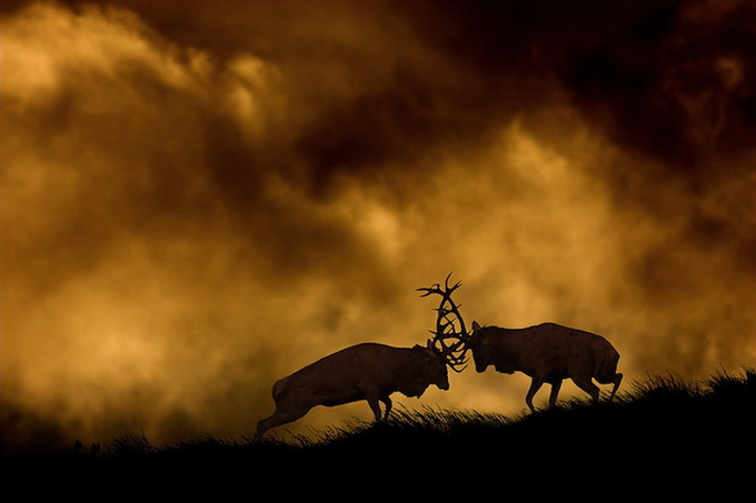 wildlife-photos-by-ben-hall-02 (680x453, 62Kb)