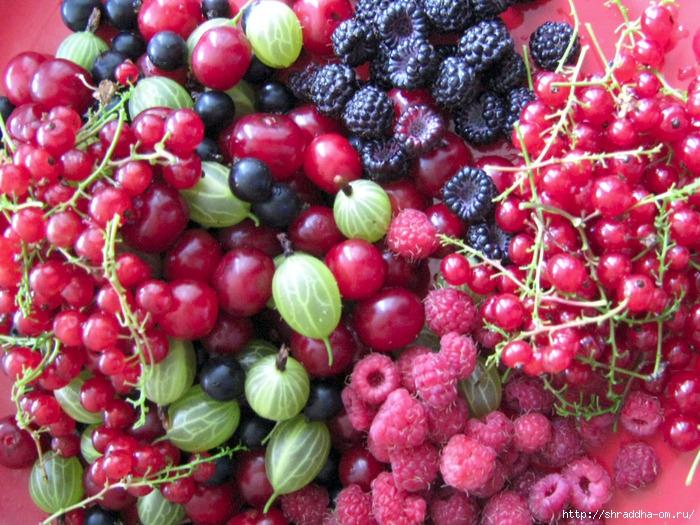 ягоды, малина, вишня, крыжовник, смородина, Shraddha, 2 (700x525, 348Kb)