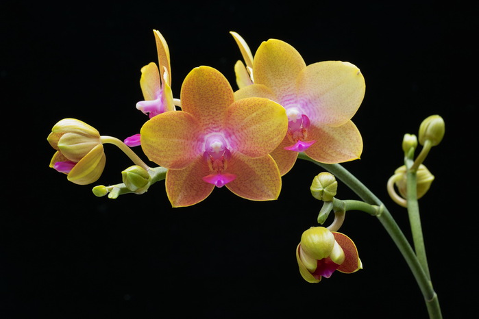 flowers-26 (700x466, 63Kb)
