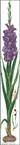 Превью violet Gladioli (95x700, 87Kb)