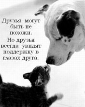 1253726069_bestmoby.ru_004 (176x220, 11Kb)
