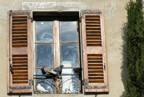 fenetres-autres-animaux-autres-oiseaux-avignon-france-855676532-931481 (550x371, 183Kb)